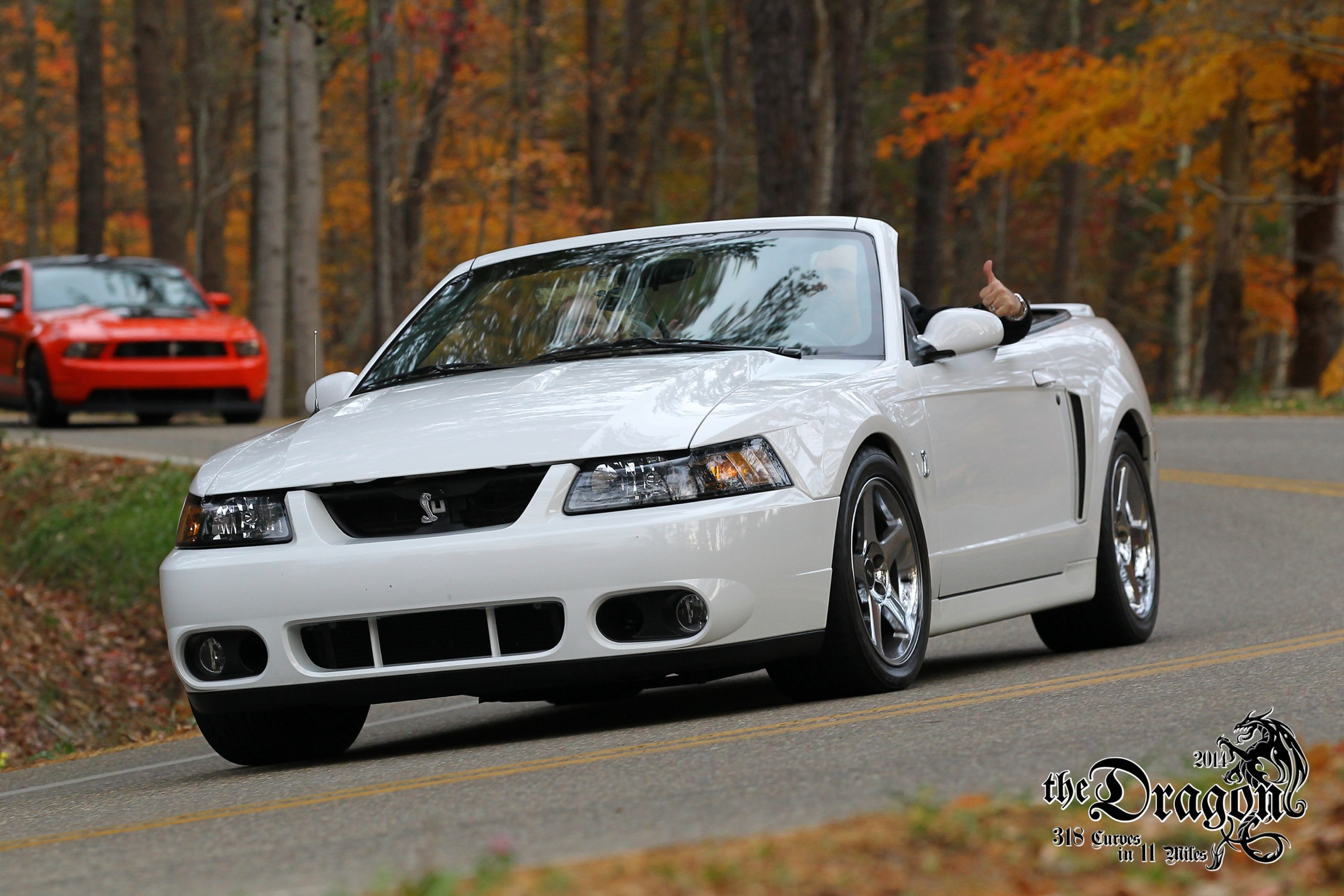 The Dragon - Joe Pearce 2003 Ford SVT Cobra Mustang Shot