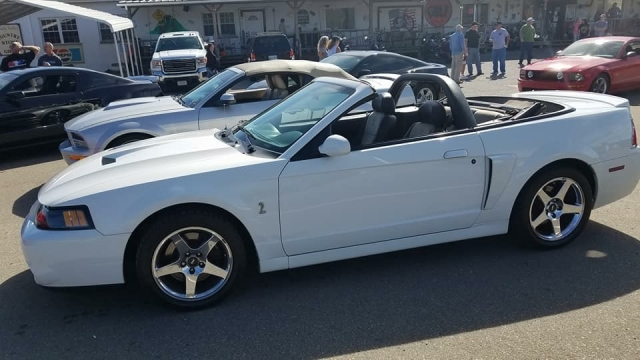 2003 Ford Mustang SVT Cobra oxford White Convertible - Joe Pearce